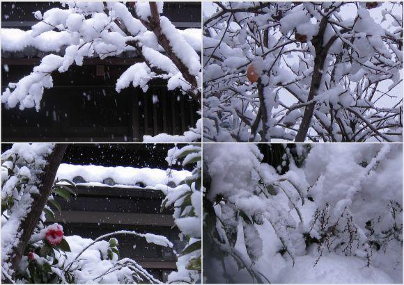 2012-02-29.jpg