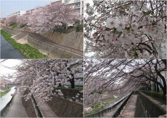 2012-04-061.jpg
