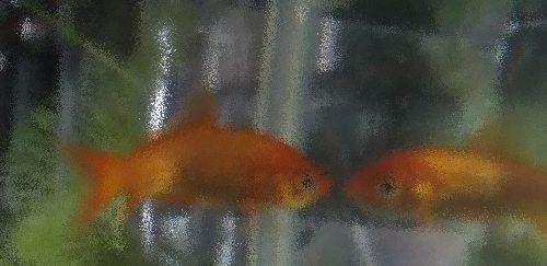 ウチの金魚.jpg