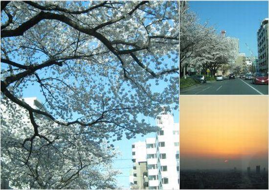 2012-04-081.jpg