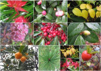 雨上がりの庭12月.jpg